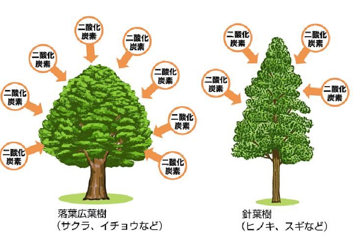 広葉樹・針葉樹