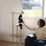 「猫とインテリア」はじまりました。今週末にはトークショーも開催!