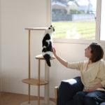 【イベント告知】「猫とインテリア」 愛猫と使い心地を一緒に体感しよう!!